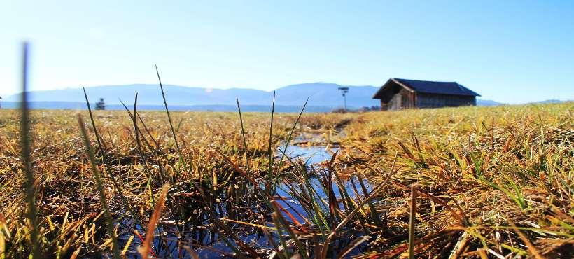 Bild von einer Mosslandschaft