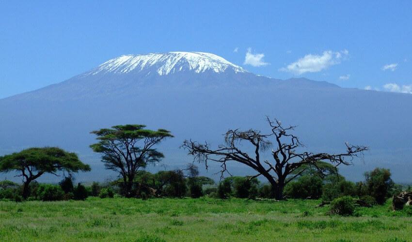 Eine grüne Steppe mit dem schneebedeckten Kilimandscharo im Hintergrund.