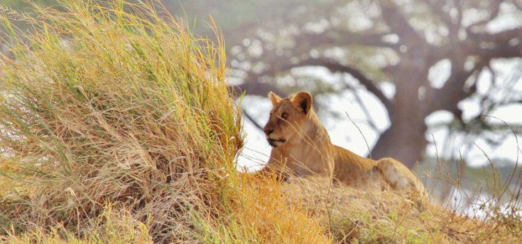 Das sind die Top-Sehenswürdigkeiten in Tansania