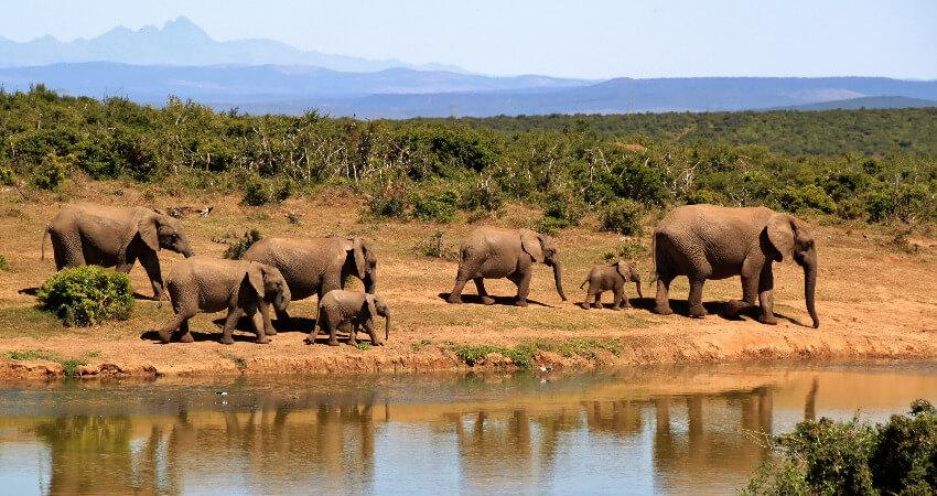 Sieben Elephanten unterwegs in der Savanne