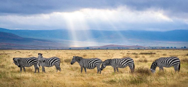 Beweggründe für eine Reise nach Tansania
