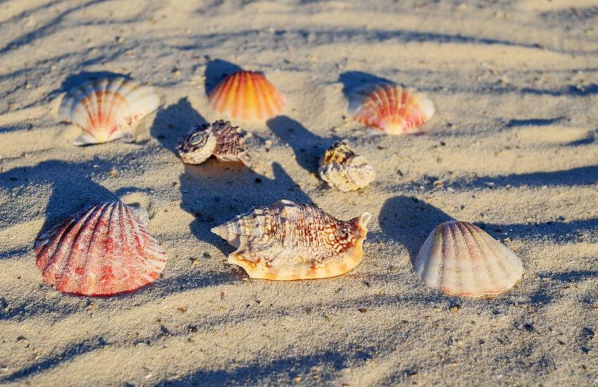Acht Muscheln im Sand platziert, um ein Foto zu machen