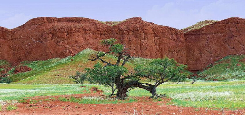 Ein Baum, umgeben von etwas grüner Wiese wie auch rotem Sandstein.
